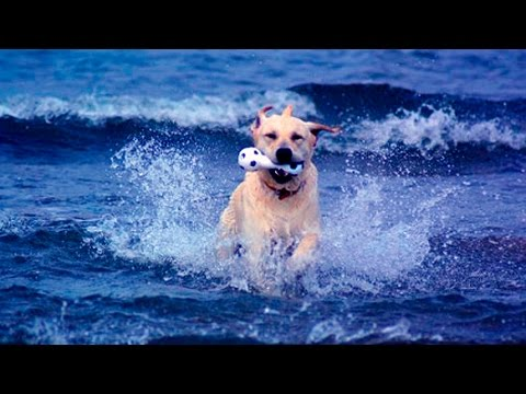 34336 - Recopilació de perros jugando con el agua