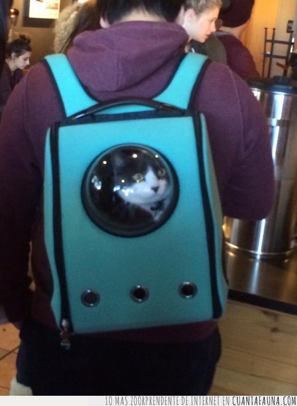 felido,felino,Gato,mirada,mochila,schröedinger,ventana