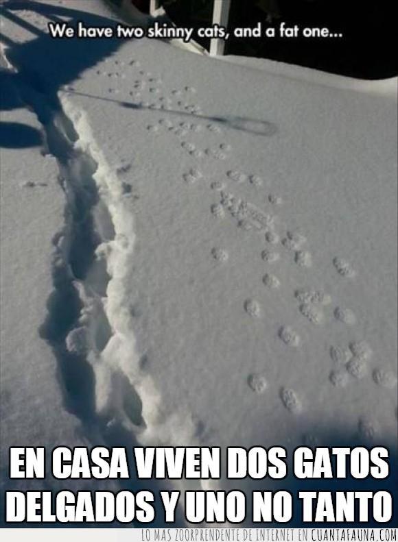 delgado,gato,gordo,marca,nieve,surco