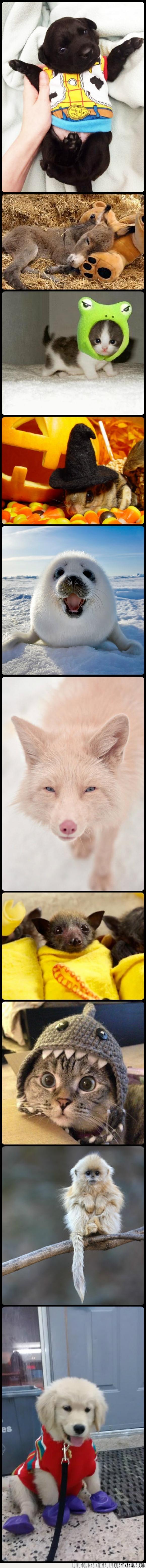 animales,ardilla,burro,cachorros,diabetes,foca,gaticos,gatitos,gatos,mininos,monadas,mono,perro,perros