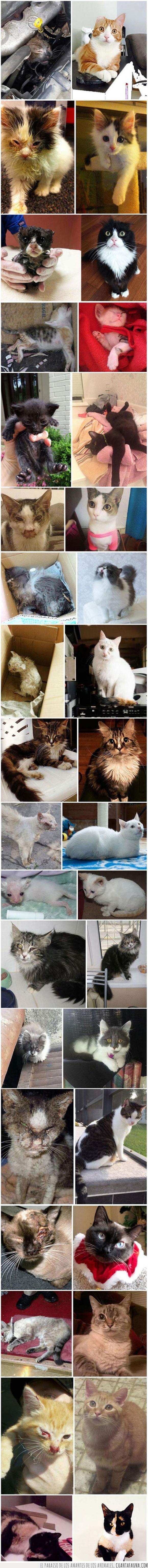 adopción,adoptar,gato,oreja,rescatar,salvar