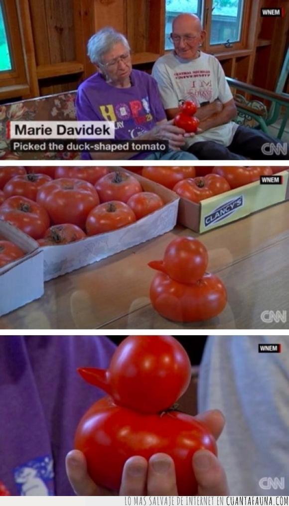 curioso,forma,fruta,pato,tomate,verdura