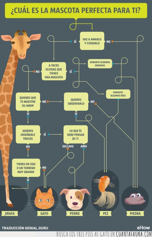 cuidar,encuesta,gato,jirafa,mascota,pez,piedra,zoo