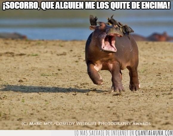 correr,Hipopotamo,pajaro,quitar,sacar,socorro