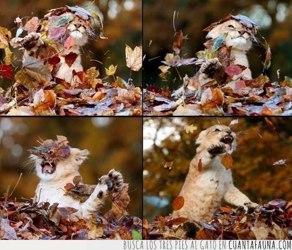 cachorro,hoja,leon,lucha,otoño