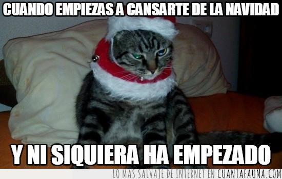 cansar,empezar,gato,miau,navidad,navideño