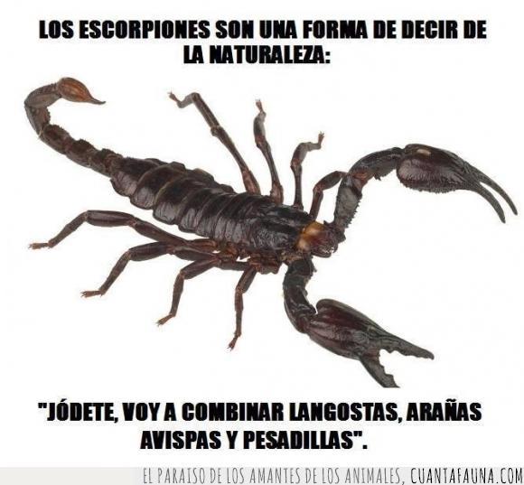 araña,avispa,escorpion,langosta,mezclar,naturaleza,pesadilla,volar