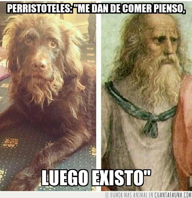 aristóteles,crecía,filósofo,guau,perros,pienso,similitud