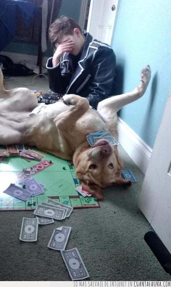 can,desmontar,encima,jugar,Monopoly,perro,tirar