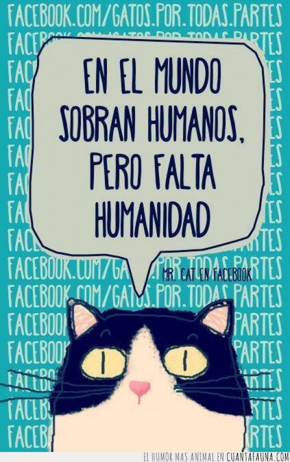 falta,faltar,gato,humanidad,humanos,miau,sobran,sobrar