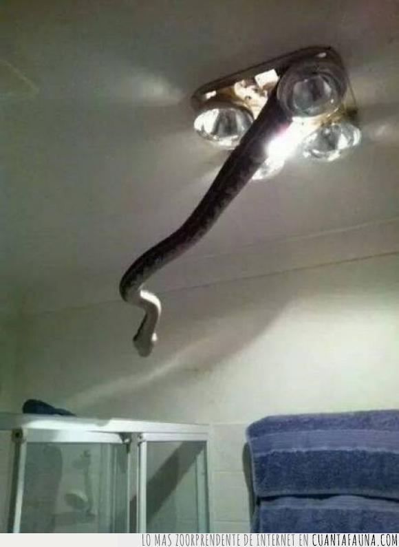 baño,colar,ducha,harry potter,luz,NAgini,serpiente,techo,tejado