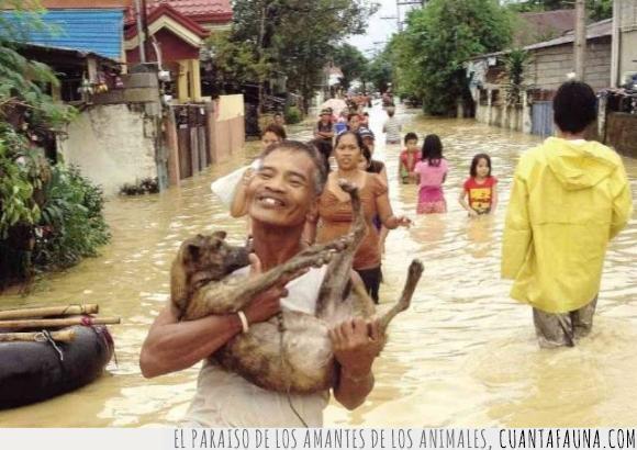 agua,cachorro,coger,hombre,inundación,niño,perro,pueblo,salvar,señor