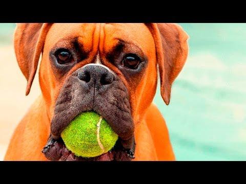 35386 - Pequeños trucos de perros
