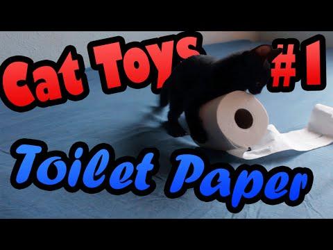35486 - El mejor juguete para un gatito puede ser un rollo de papel higiénico