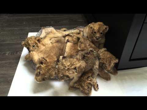 35634 - Hay quién tiene camadas de gatitos mientras que otros...