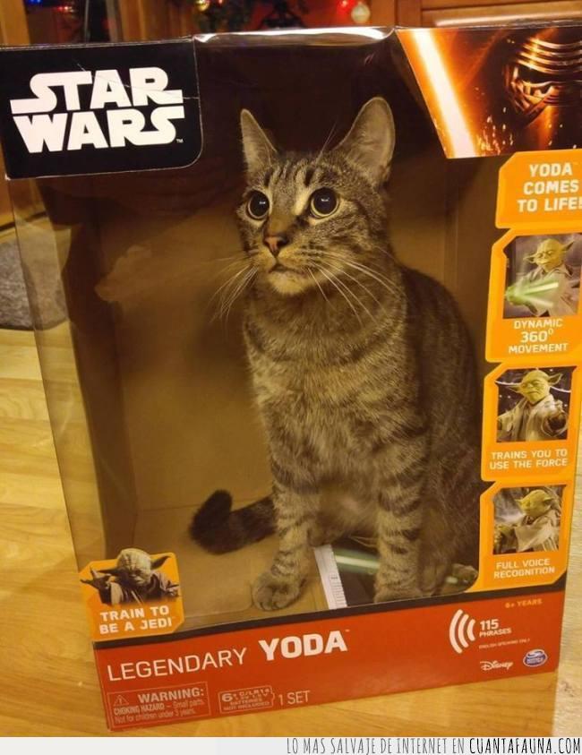 caja,gato,muñeco,star wars,traidor,yoda