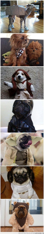 can,cosplay,disfraz,humor,originalidad,perro,Star Wars