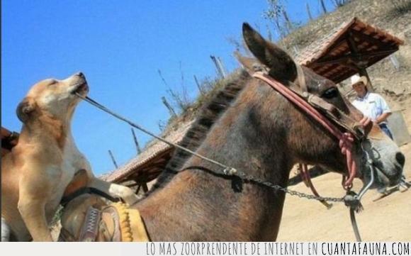 aventura,burro,calor,desierto,perro,swag,vaquero