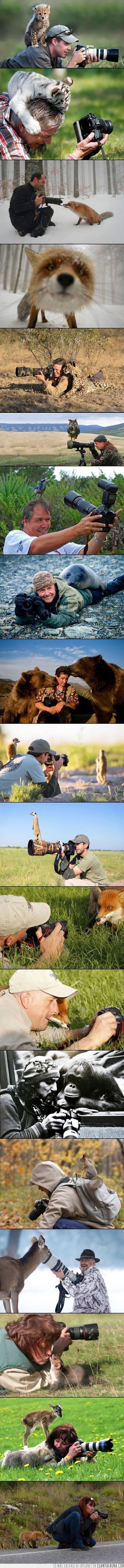 animales,ciervo,echamos de menos a Steve Irwin,en serio tiras en auto,fotografia,naturaleza,oso,suricata,zorro