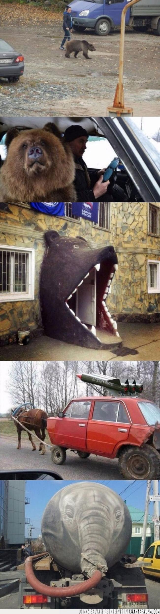 loco,locura,oso,rusia,rusos