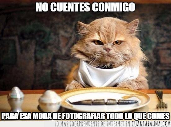 comida,expresión,foto antes de comer,gato,menú,moda,plato,redes sociales,serio