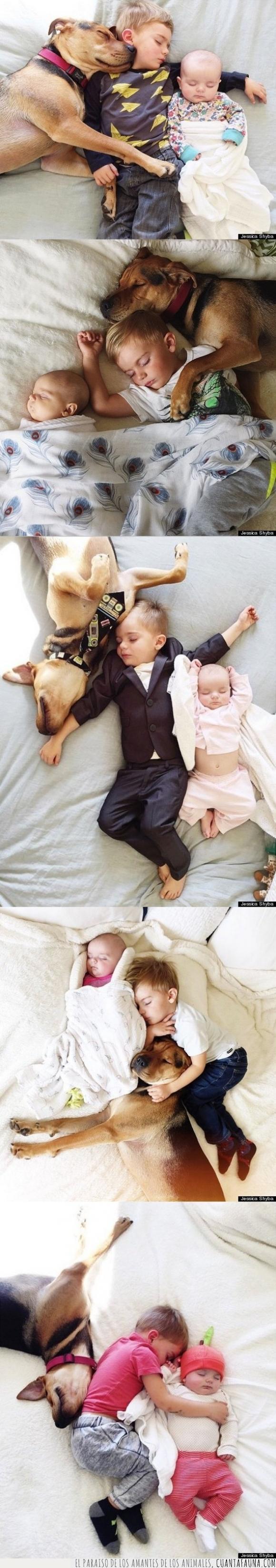 Beau,cama,dormir,hermana,hermano,Jessica Shyba,perro,siesta,Theo