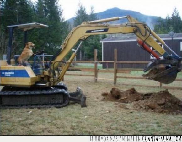 agujero,cavar,escarbar,excavadora,jardín,madre,mamá,maquina,perro