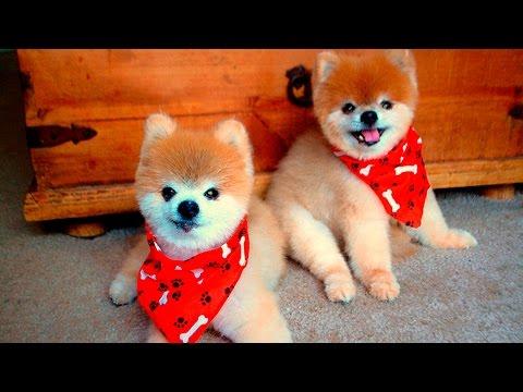 36109 - Estos perritos son capaces de derretirte el corazón