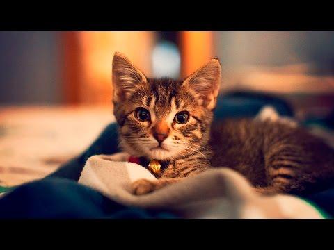 36157 - Estos gatitos cayendo dormidos plácidamente te harán entrar sueño...