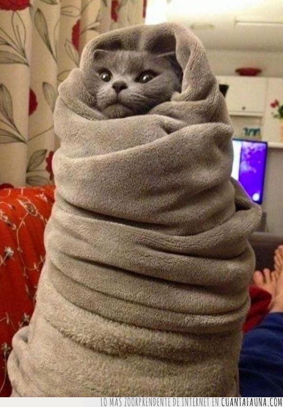 frio,gato,invierno,manta,tapar