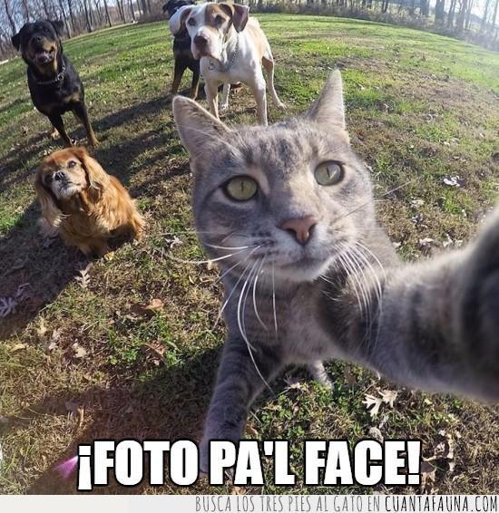 casual,gatos,perros,selfie