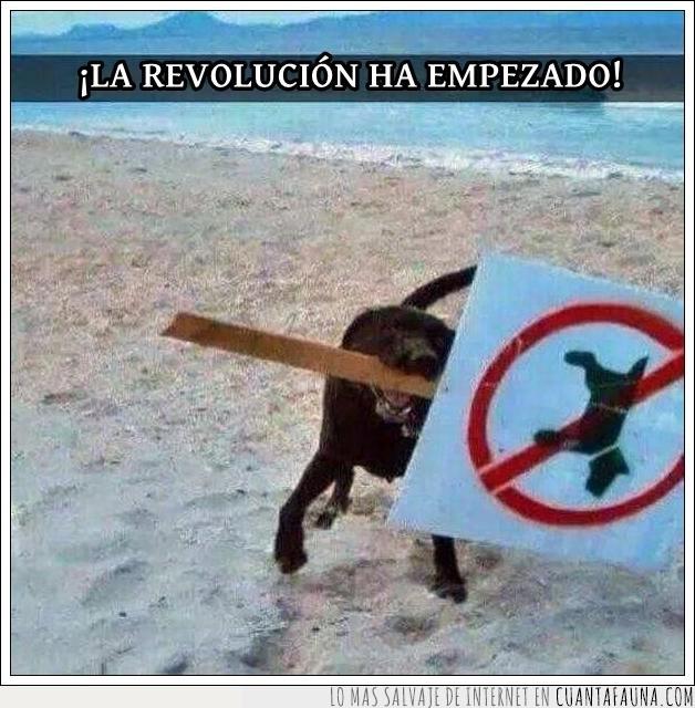 alzamiento,desobedecer,perros. revolución,rebelde
