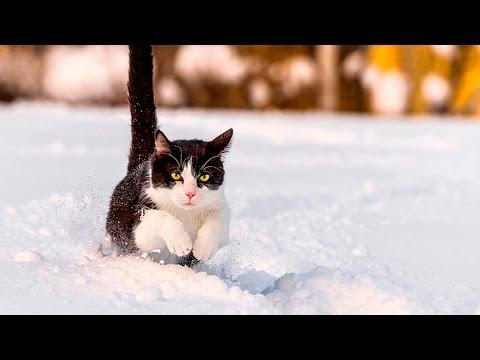 36519 - Estos gatitos ven la nieve por primera vez ¡Cómo lo viven!