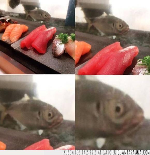 cara,crudo,miedo,pecera,pescado,pez,sushi