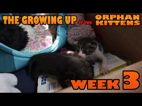 36607 - Gatitos monísimos con 3 semanas de edad