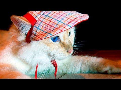 36610 - Gatitos con sombreritos. Nada más adorable es posible