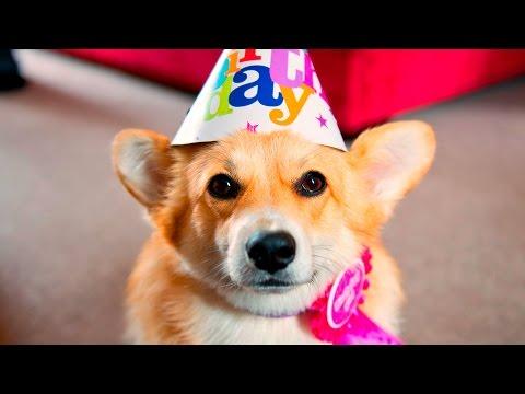 36612 - Estos perros celebran el mejor día del año: ¡su cumpleaños!