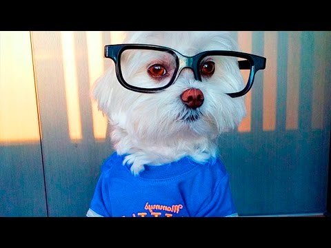 36621 - A estos perritos monísimos las gafas les quedan mejor que a ti
