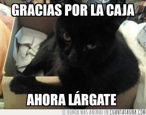 caja,gato,negro