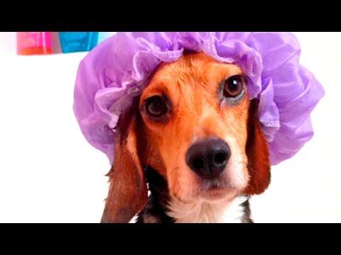 36708 - La hora del baño es algo primordial para todos, ¡para estos cachorros también!