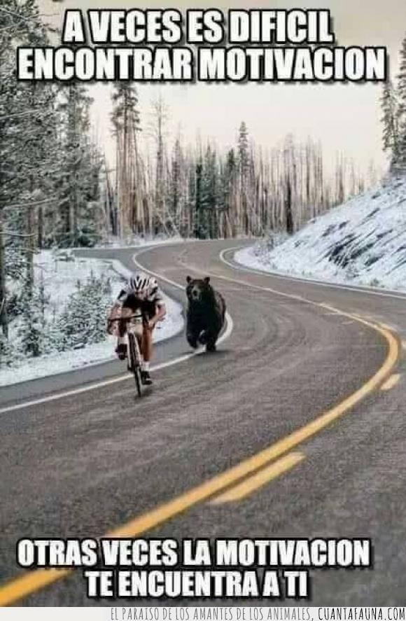 bicicleta,ciclista,correr,detras,encontrar,motivación,oso