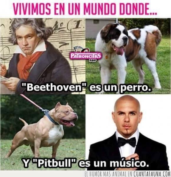 Beethoven,mentira,músico,perro,Pitbull