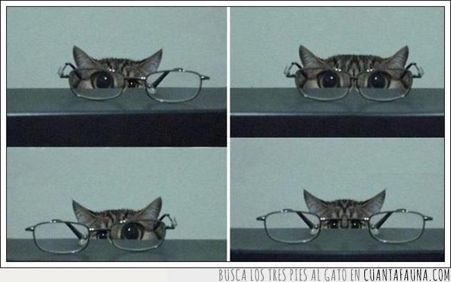 abuelo,divertido,gafas,gato,lentes,mirar,ver