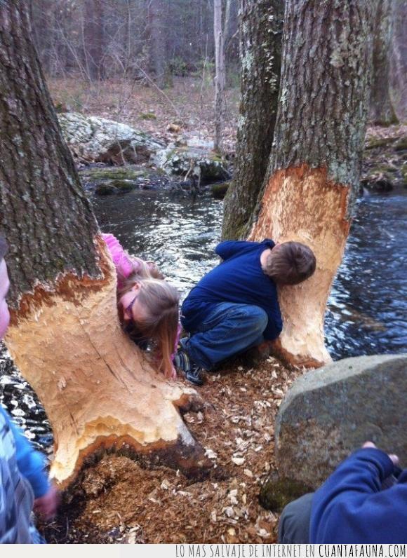 árboles,castores,Niños,ratas,talar