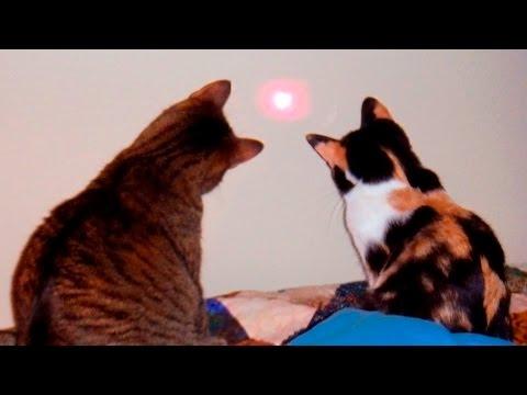 36957 - Algún día los gatos descubrirán qué causa los láseres y estallará una guerra...