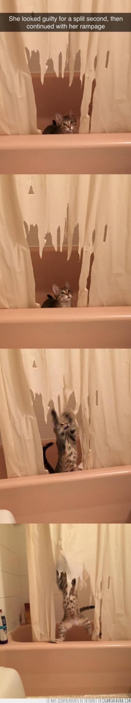 bañera,baño,cortina,destrozar,gato,romper