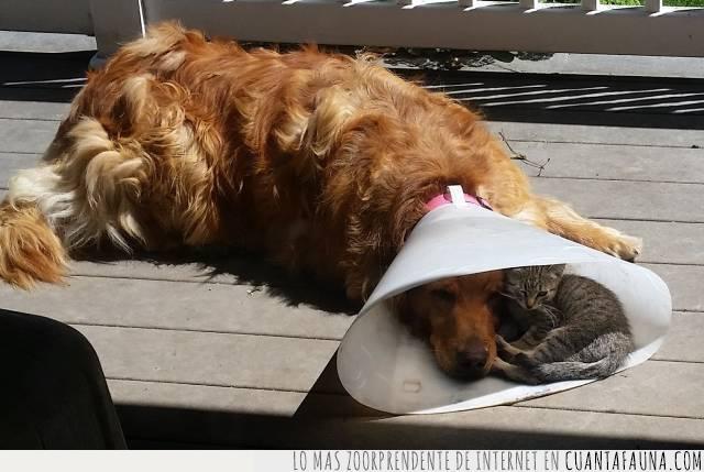 apoyo,compañeros,entender,gato,perro,solidaridad