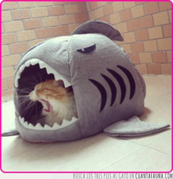 abrir,boca,caseta,gato,tiburon