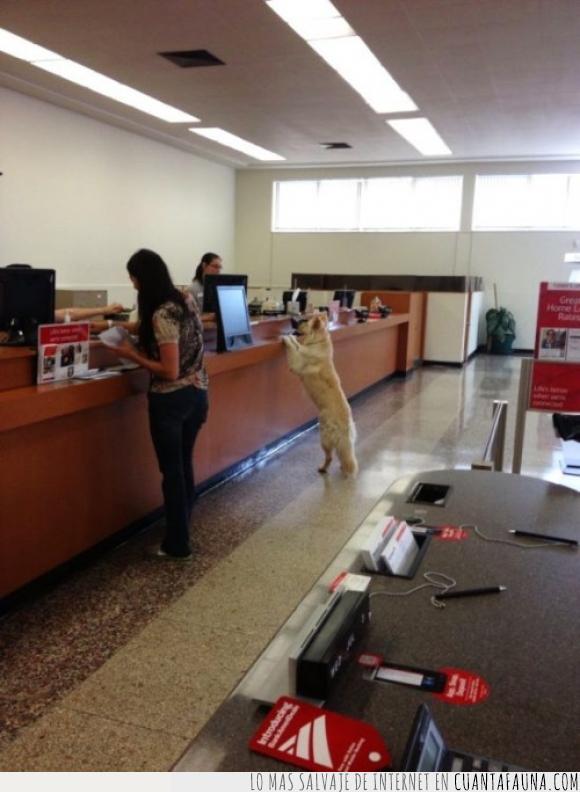 banco,crédito,hablar,pedir,perro,ventanilla