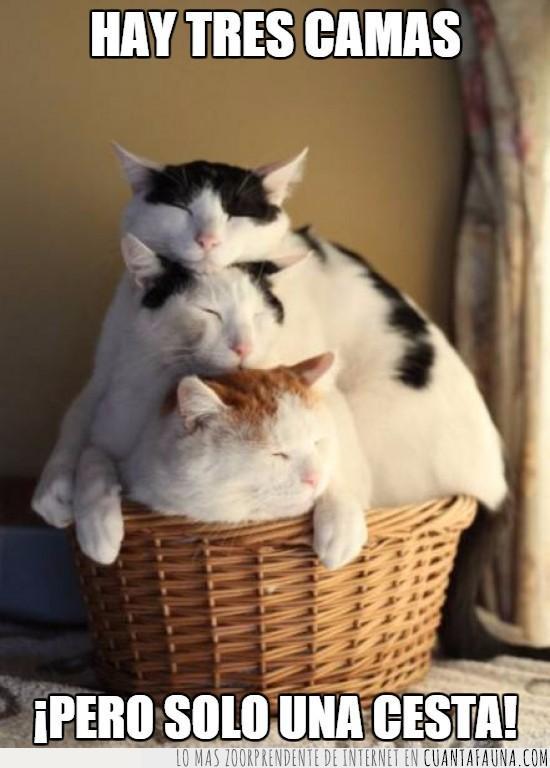antojados,cada uno tiene su cama,cesta,gatos,montón